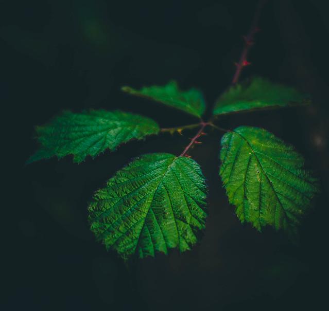 5 hojas