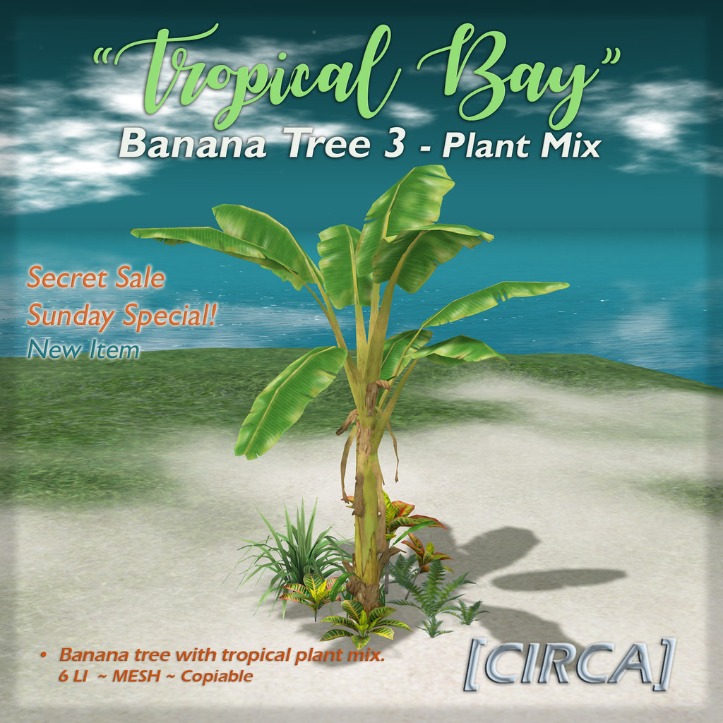 "SSS Event Item | [CIRCA] – ""Tropical Bay"" Banana Tree 3 – Plant Mix"