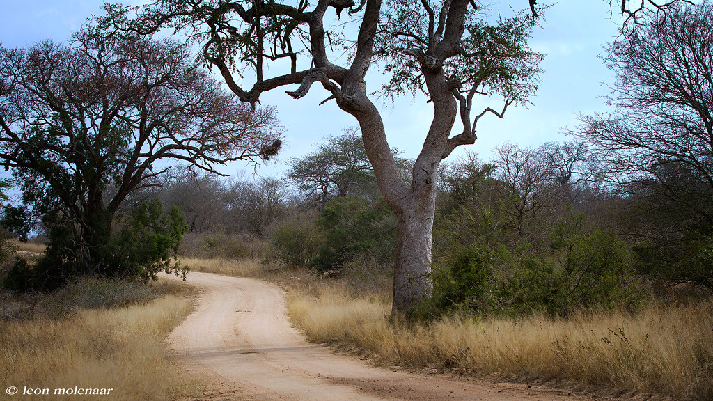 Road S34 - Kruger National Park