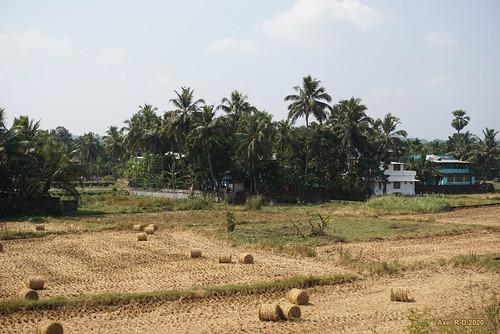 champs india kerala