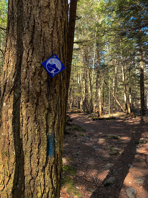 Lower Bill Ballard Trail: hiking vermont billballardtrail norwich unitedstatesofamerica