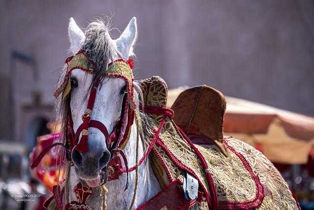 Horse Art, Meknes, Morocco