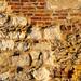 Peterhouse wall