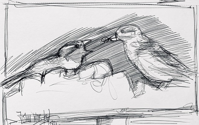 First drawing from my garden hide today. Sparrow feeding fledgling. Ballpoint pen drawing by jmsw, just for Fun.