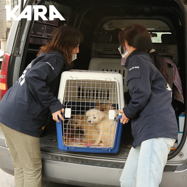 KARA: Paju Factory Dog Support Project Update 5/29/2020