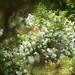 Gartenidylle-bw_20200530_5723.jpg