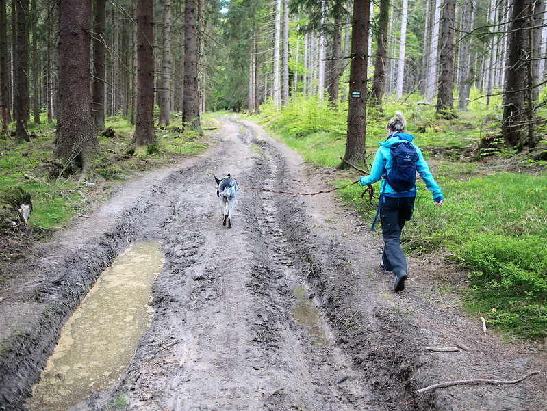 Góry Stołowe z psem