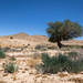 Acacia in the desert by Sebastian Witkin