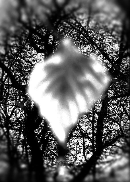blatt vor ästen leaf in front of branches I