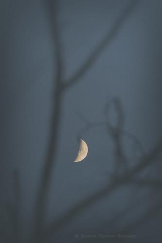 Lunar Wood