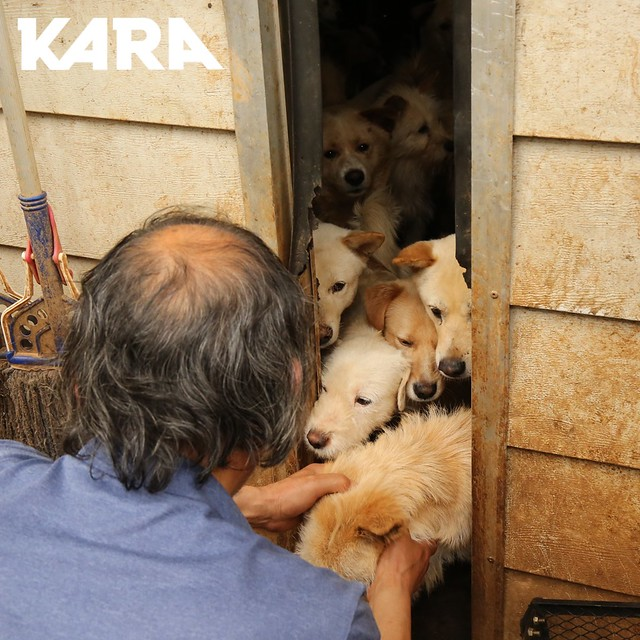 KARA: Paju Factory Dog Support Project