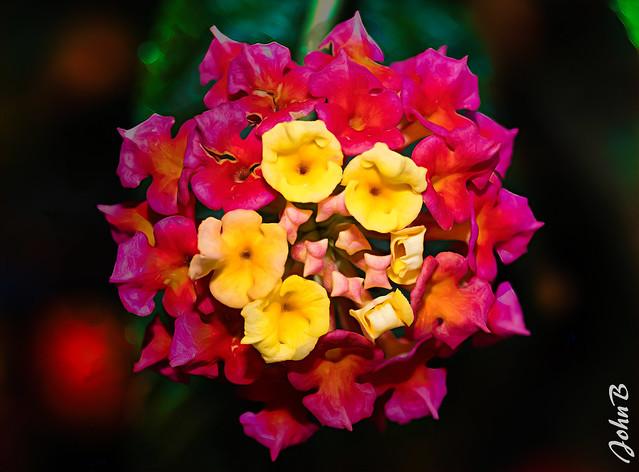 Flores de Beatriz