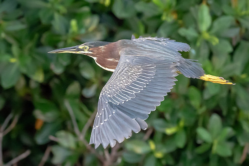 outdoor dennis adair wildlife 7dm2 7d ii ef100400mm canon florida bird