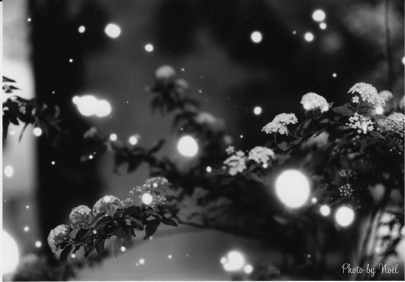雪降るtocolier - 店内編 by Noël Café