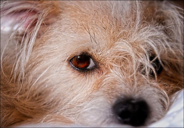 Abbie's Watchful Eye