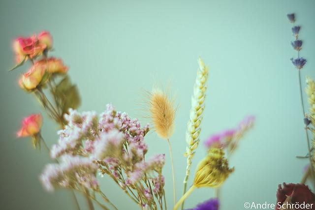 Dried Flowers #2