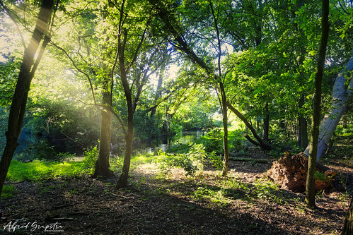 The Sunny Evening Forest Walk