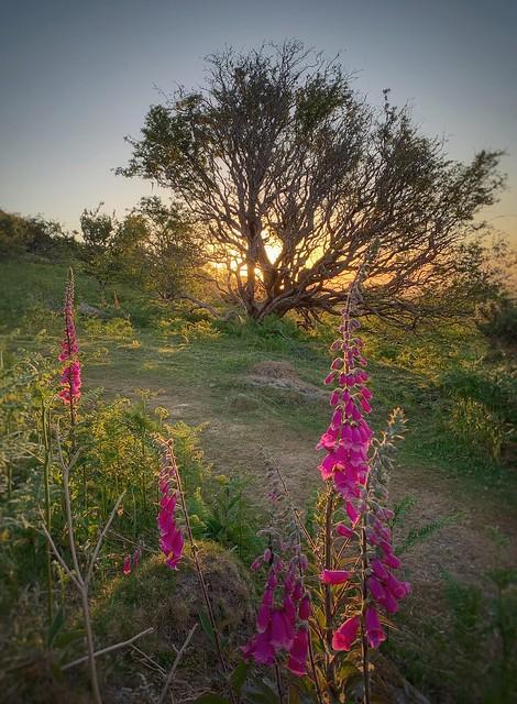 Early Morning sunlight...