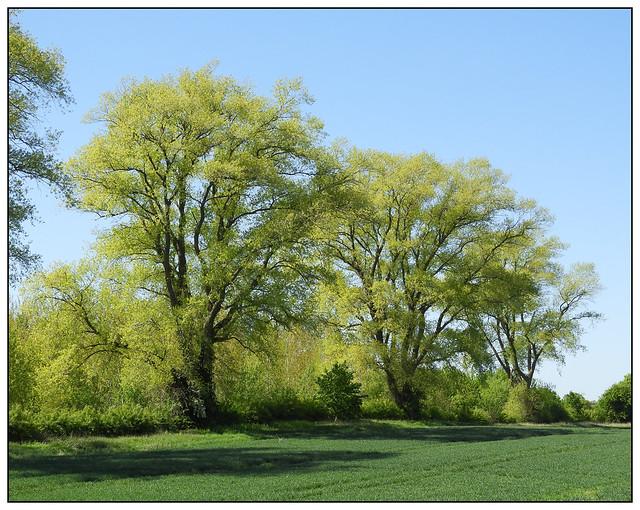 2020-0310 - Spring greens 2
