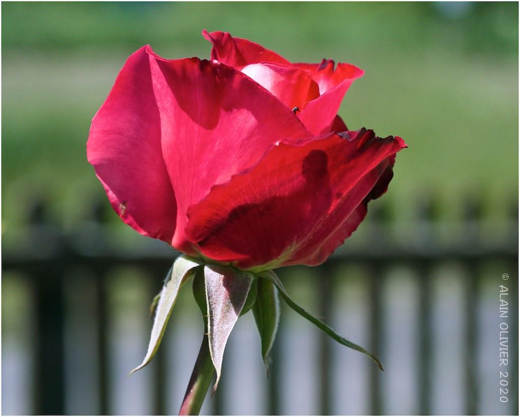 Dimanche au jardin - Page 2 49955001008_07e3377b47_b