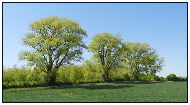 2020-0309 - Spring greens 1