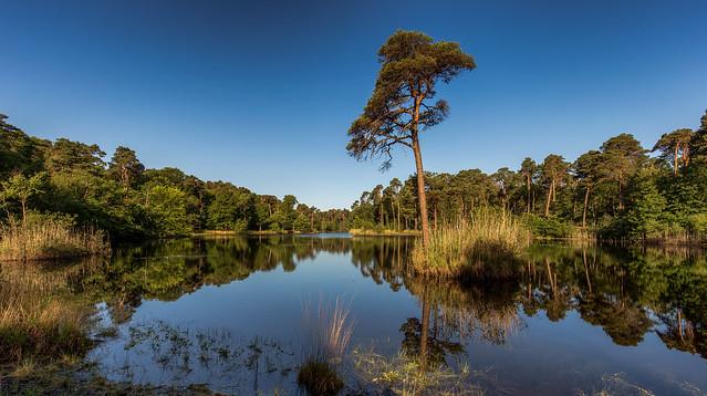 Oisterwijk bossen en vennen in 2020