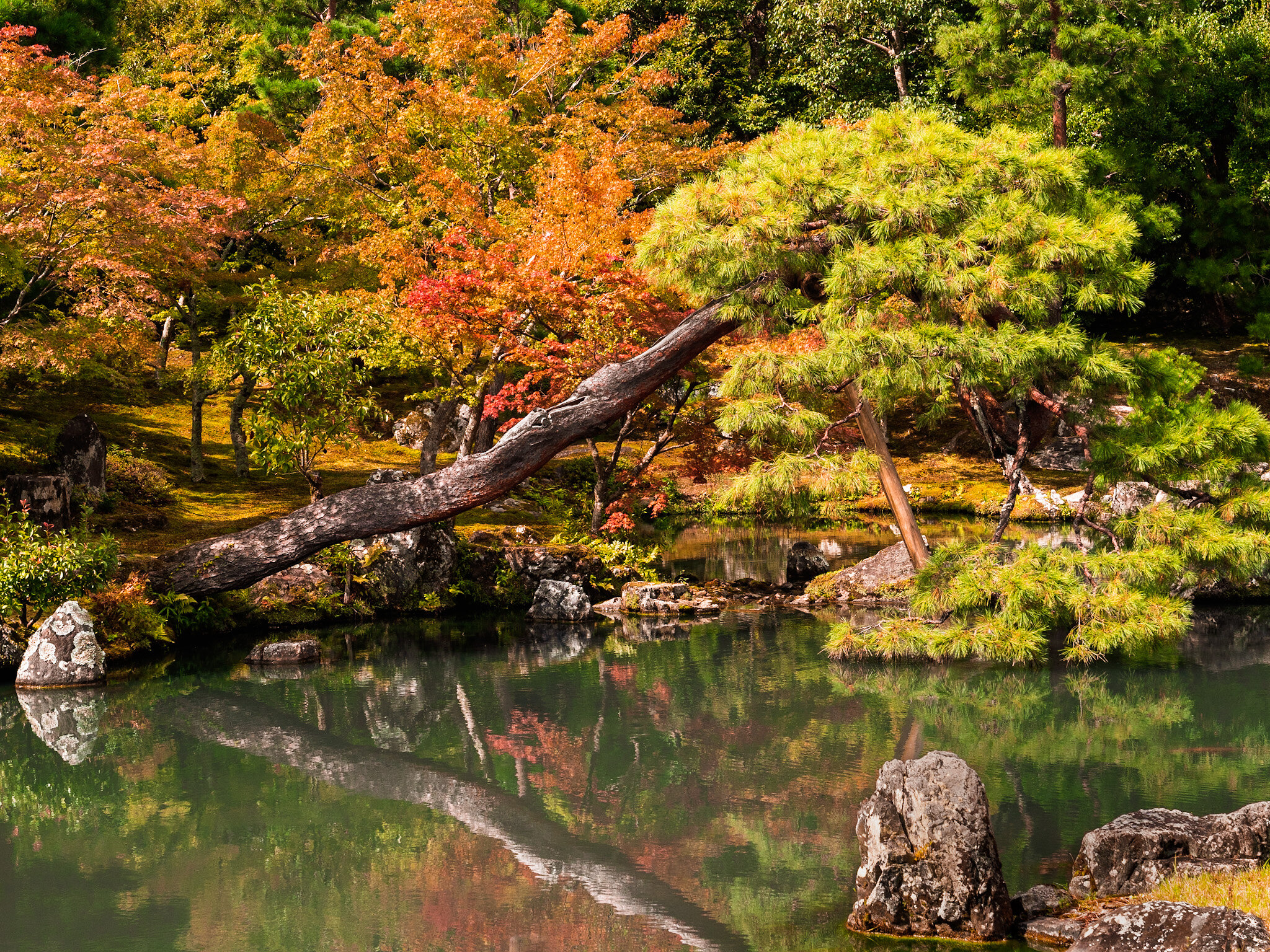 Autumn Colours in Kyoto