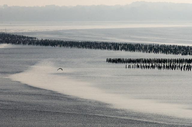 Le coeur à marée basse