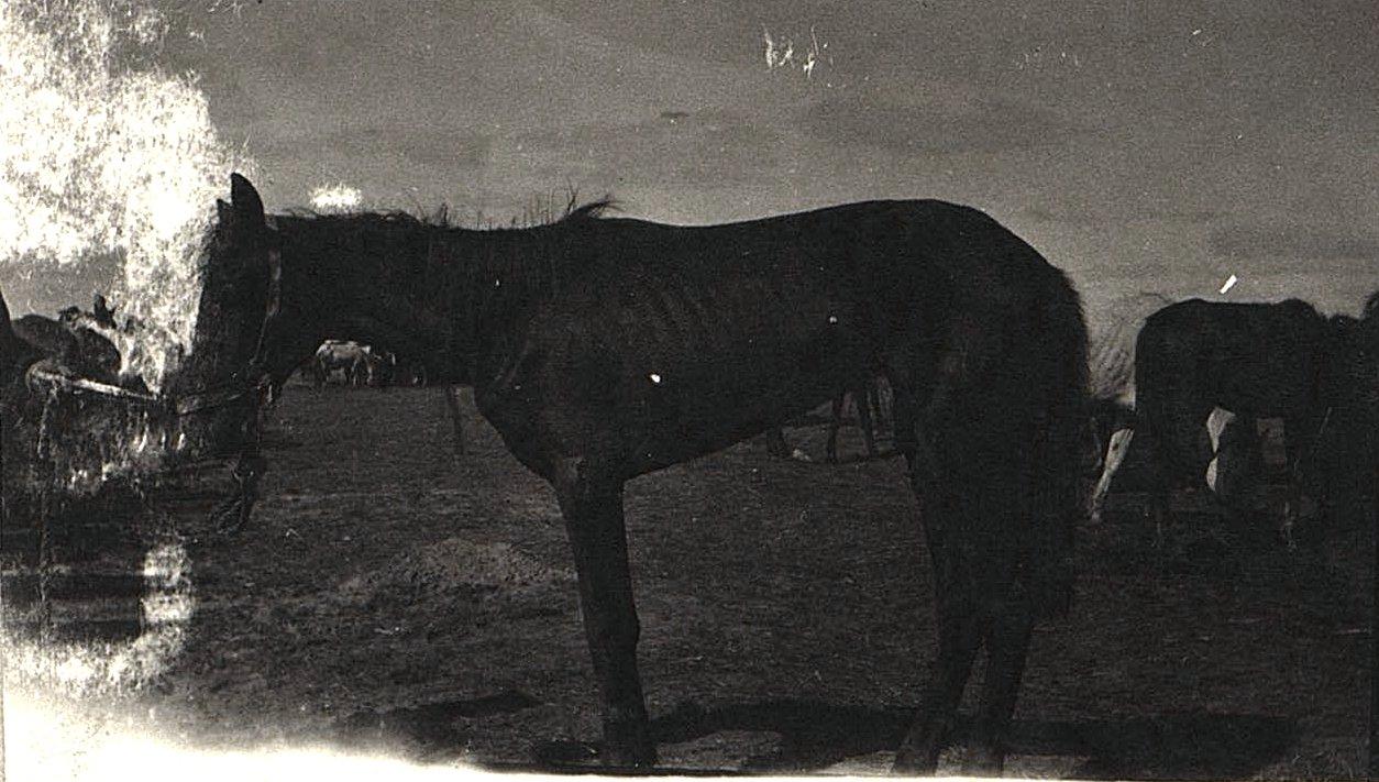 48. Голодные и утомлённые лошади