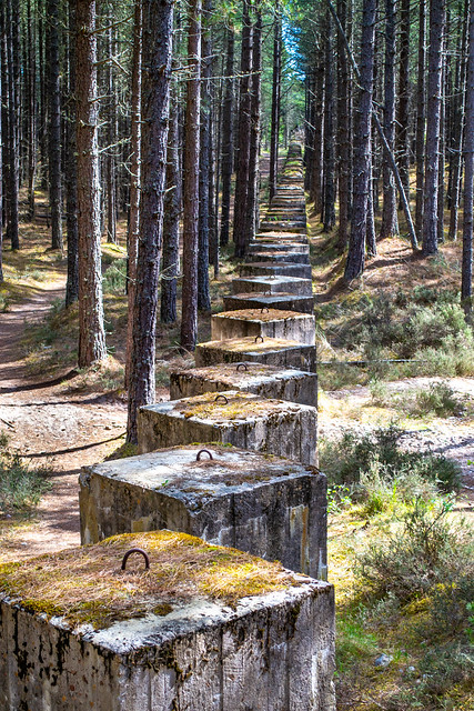 War Defence Pillars, Lossie Forest.