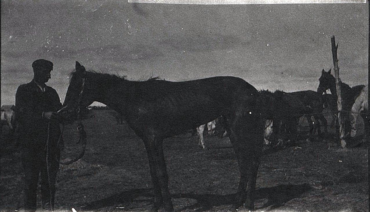 47. Голодные и утомлённые лошади беженцев