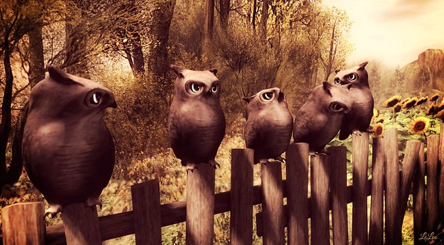 Owls in a row_The afternoon stare down @ Breath of Nature