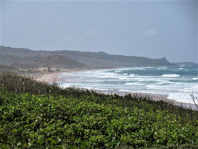 Atlantic waves, coast from Ermy Bourne Highway, St. Andrew, Barbados