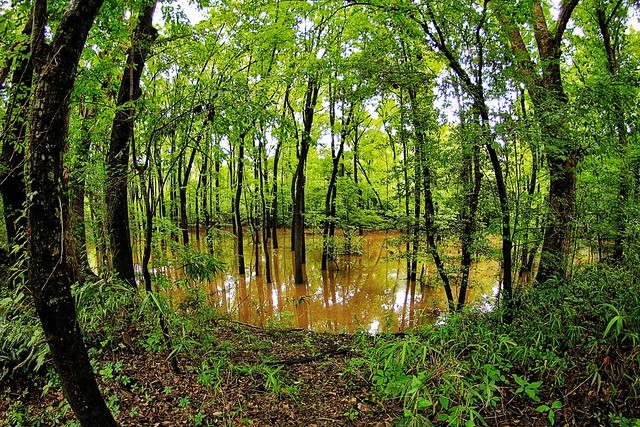 """""""Congaree Creek on the Timmerman Trail"""""""