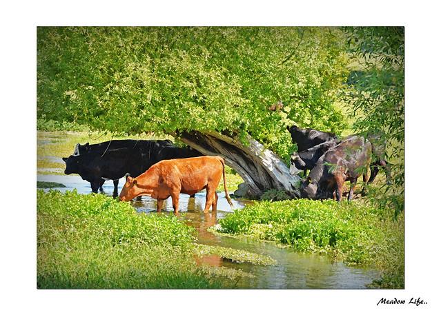 Summer Meadow..