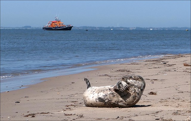 Seal and Lifeboat