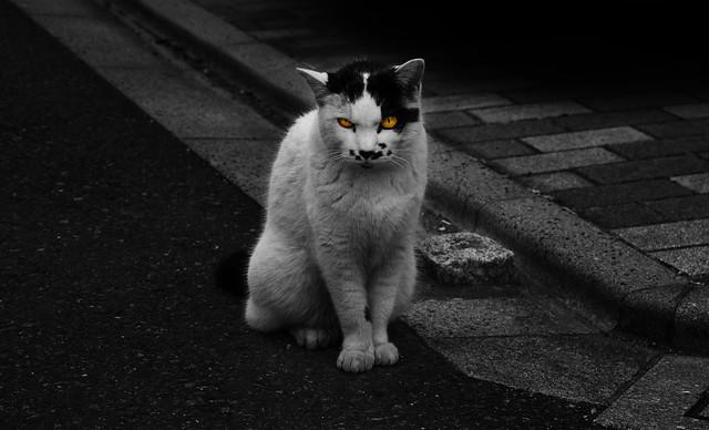 A distrustful cat