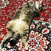 むぼうびねこ #ねこ #猫 #cat #gatto #chat #kitten