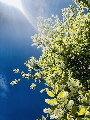 garden and neighbourhood nature, sweden, may 2020 💜