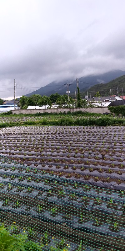비온뒤 아침풍경 이야기 |무릇 농사는 하늘과 땅이 짓고 사람은 거들 뿐!