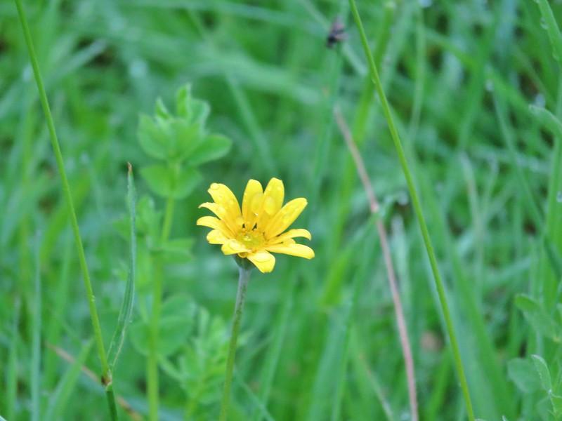Flower at McFadden's Marsh