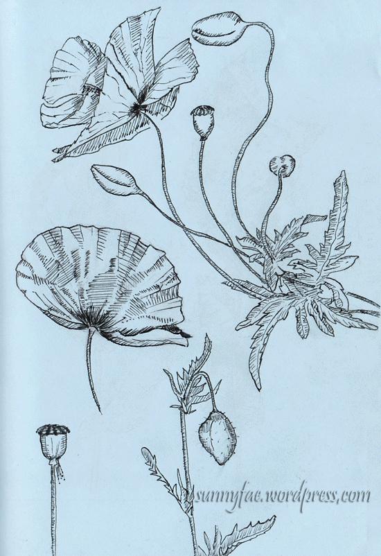 poppy drawn with fountain pen