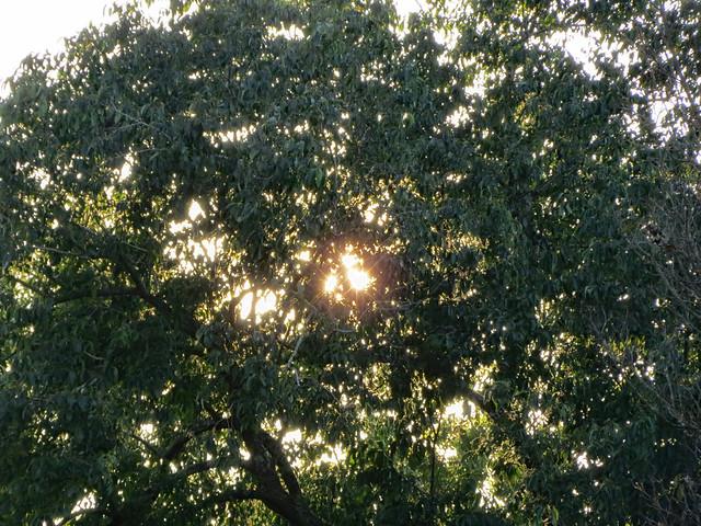 Sunlight Through Tree Branches.