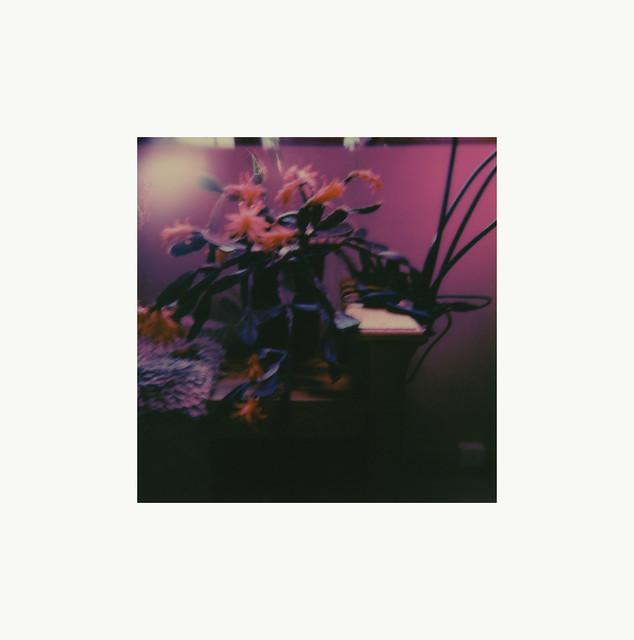 leon's cactus blooming...