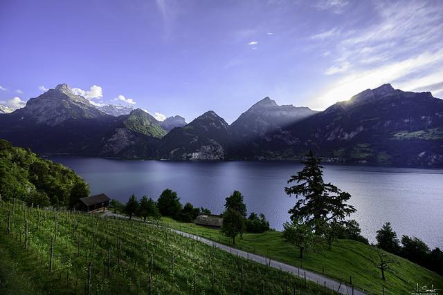 Beautiful lake view from Tellsplatte - Vierwaldstättersee - Schwyz - Switzerland