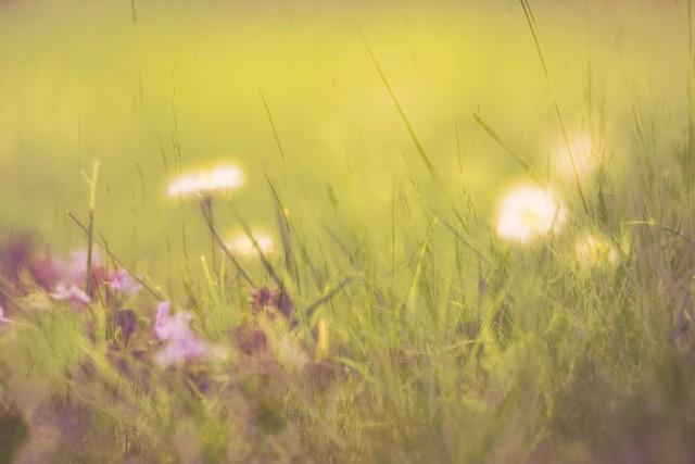 Series Haiku Photography #6