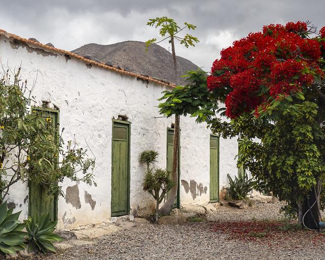 House and flamboyan. Casa y Flamboyan