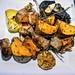 Sweet Potato, Sausage, Garlic, Thyme and Mushroom Bake