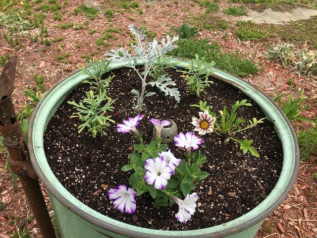 Washtub planter