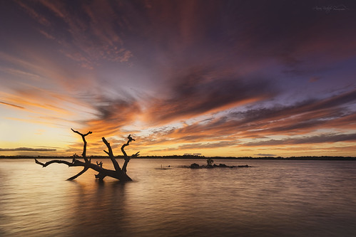 brighton redcliffe sunset queensland australia red tree nikond600 landscape